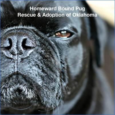 Homeward Bound Pugs