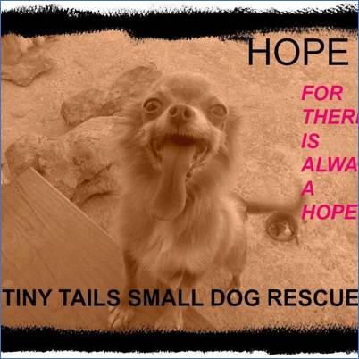 Tiny Tails Small Dog Rescue