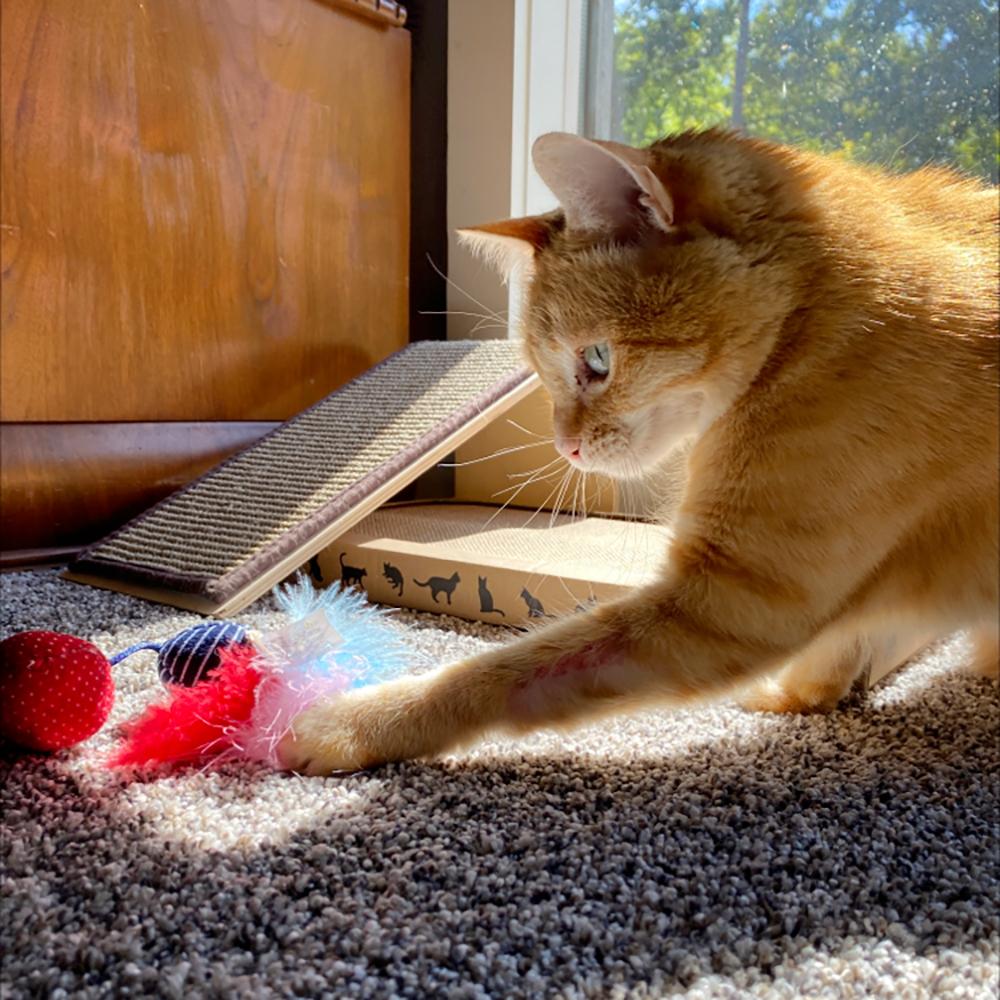 About Carey Pet & Home Care