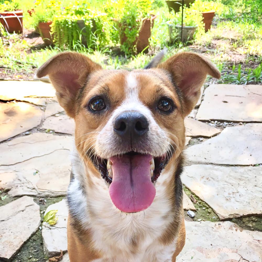 Carey Pet Home Care Contact Us