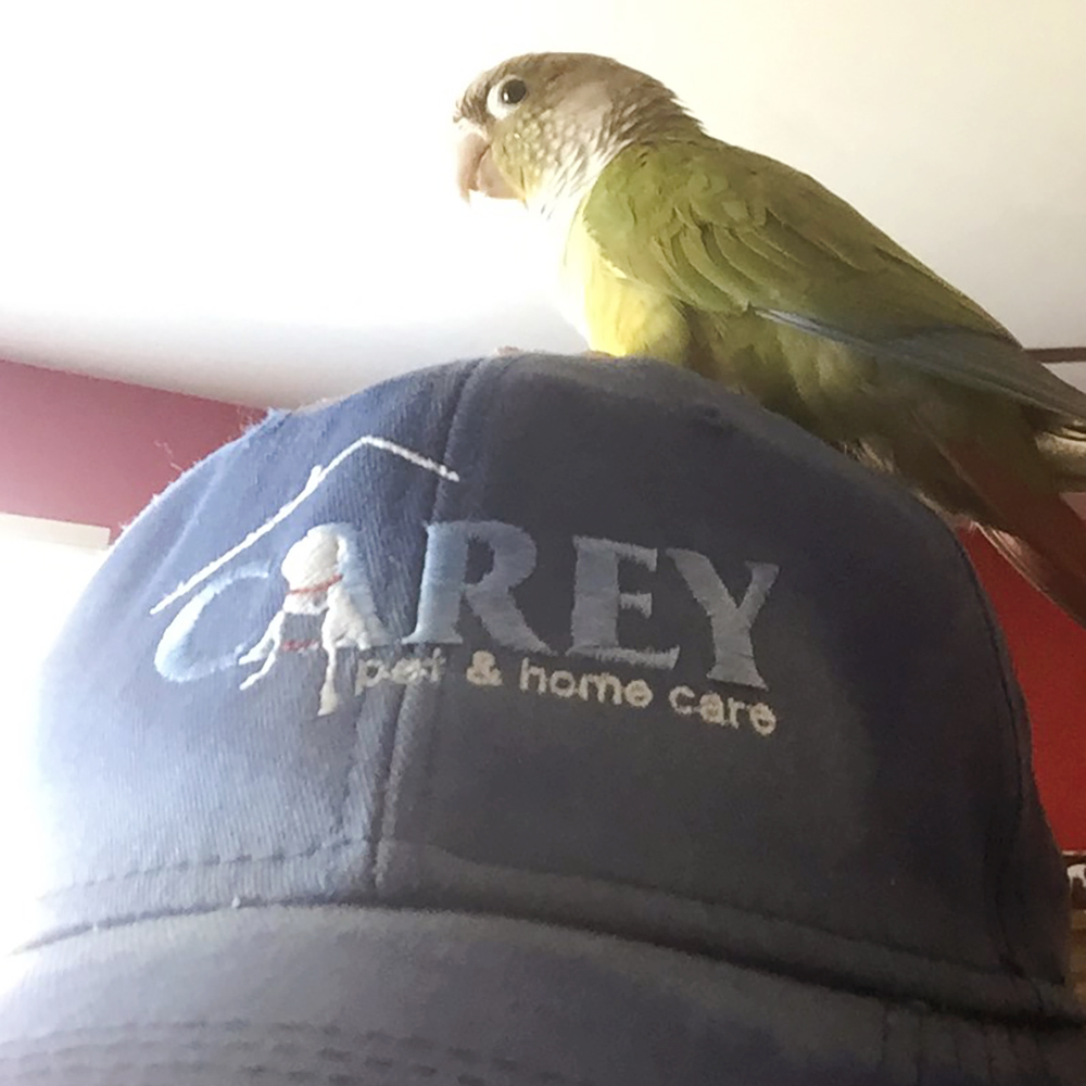 Join the Exceptional Carey Pet Team!